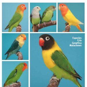 Antologia del Agapornis (9789058216397)