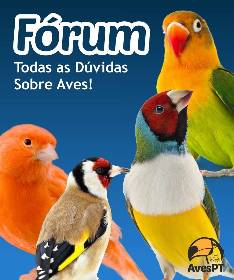 Fórum AvesPT - Todas as dúvidas Sobre Aves