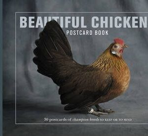 Beautiful Chickens Postcard Book (9781907332234)