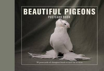 Beautiful Pigeons Postcard Book (9781907332951)