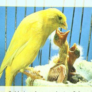 9788425507472 - Cómo criar los canarios