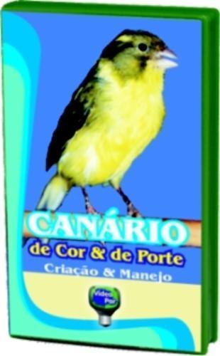 CANÁRIO DE COR E DE PORTE