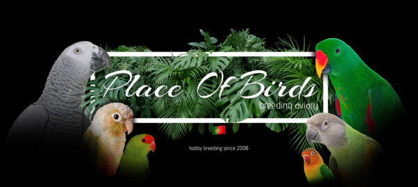 Place of Birds